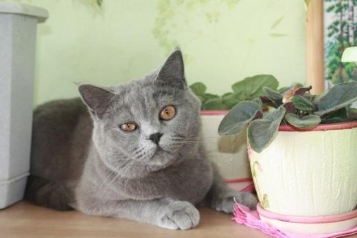 кот андрюхи